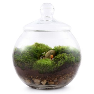 A fun moss terrarium by Uncommon Goods