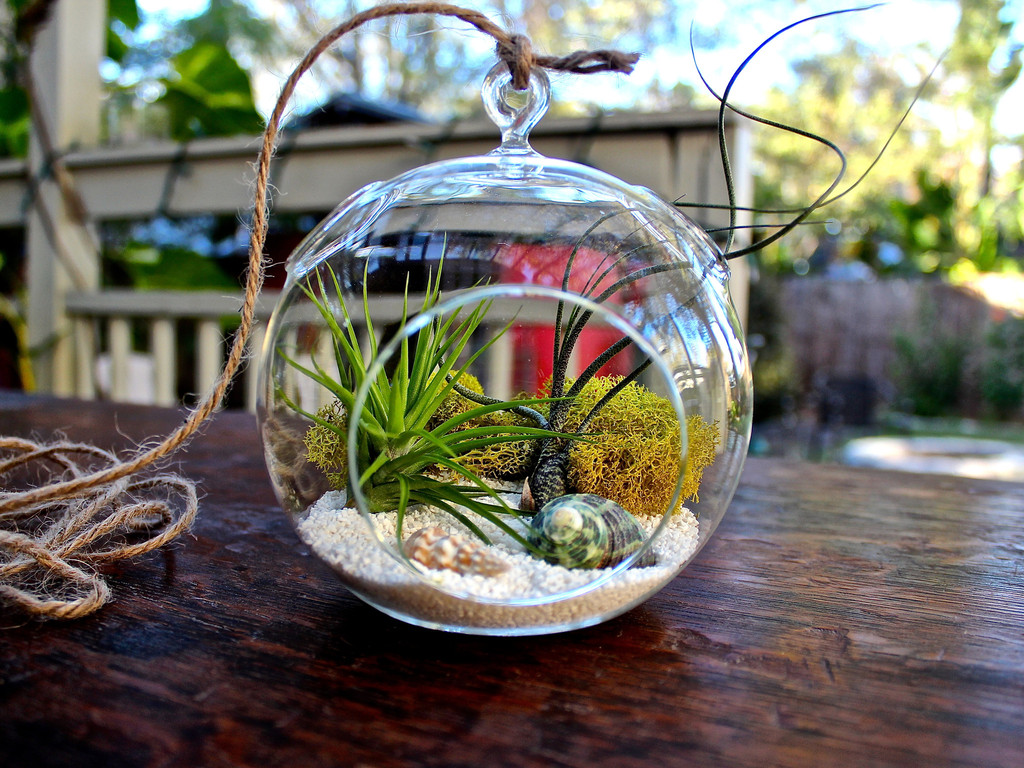 Air Plant Terrariums Make A Terrarium