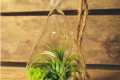 A hanging air plant terrarium from