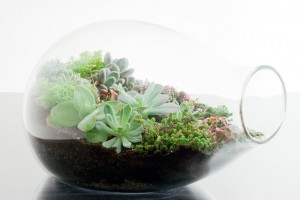 A succulent terrarium from Mark Saidnawey