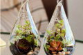 Choosing a nice variety of plants is important, like these hanging terrariums from