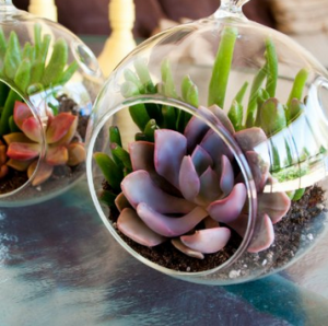 Some great succulent terrariums by Shop Succulents