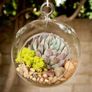 Colorful succulents give a fun pop of color.