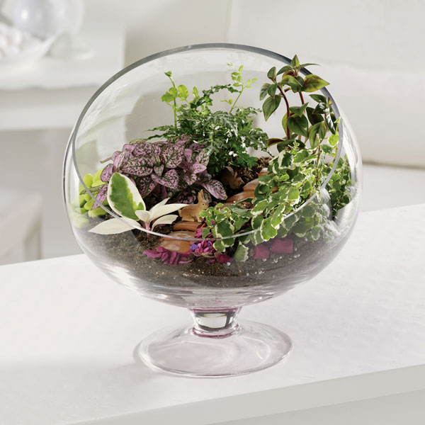 what to plant in a terrarium make a terrarium. Black Bedroom Furniture Sets. Home Design Ideas