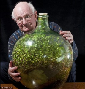 Closed terrariums require very little care, like this terrarium which hasn't been opened or watered since 1972! Read the story here.