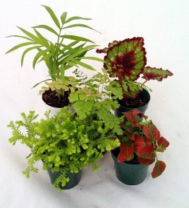 Check out our online store to find the perfect plants for your terrarium.