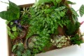 An assortment of beautiful terrarium plants from Inhabitat.