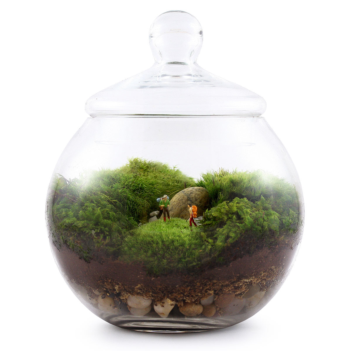 How To Grow Moss For A Terrarium Make